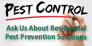 Preventative Pest Control Solutions